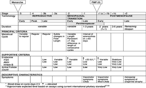 Perimenopause or Menopausal Transition - Australasian Menopause Society